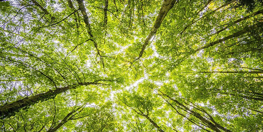 Technology Business Trends - Going green
